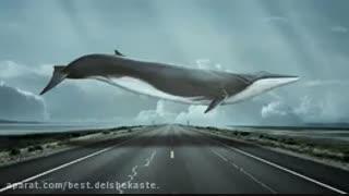 پارت سیزدهم  و چهاردهم{پارت آخر} رمان نهنگ آبی