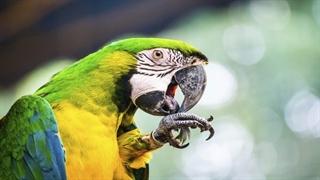 10 تا از زیباترین حیوانات دنیا