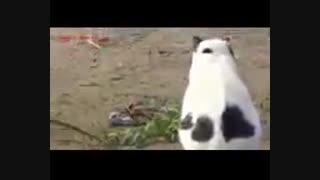 گربه علیه افعی