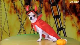 تزیین عجیب سگها برای هالوین