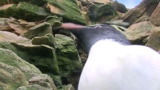 سختی های پنگوئن بودن