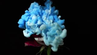 گل در آتش, یخ, و جوهر