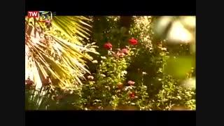 مستند ایران - یزد ( طبس ) - ۱۳۹۷/۵/۱۹ - برنامه طبیعت و حیات وحش ...