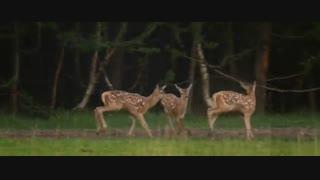 مستند وحشی  (Wild 2018 (HD
