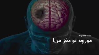 مورچه ای تو مغز من حرف میزنه!