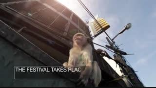 جشنواره ضیافت میمون ها در تایلند