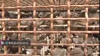 کشف 1800 پرنده قاچاق در اروندرود