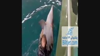 دلفینها-جزیره کیش
