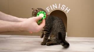 مسیریابی یک گربه در ماز