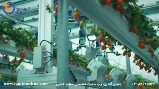ربات برداشت توت فرنگی از مزرعه و گلخانه