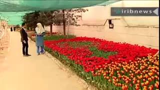200 هزار لاله هلندی مهمان بهار 1397 یکی از خیابان های تهران ( اخبار سراسری)