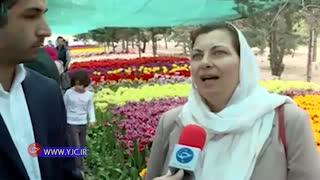 200 هزار لاله هلندی مهمان بهار 1397 یکی از خیابان های تهران ( باشگاه خبرنگاران جوان)