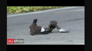 دعوای مرغ مینا در خیابان