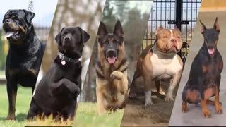 بهترین و محبوب ترین نژاد های سگ
