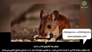 موش خانگی  روزانه 20 وعده غذا می خورد!!