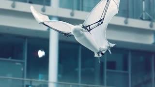ربات الهام گرفته شده از خفاش Festo