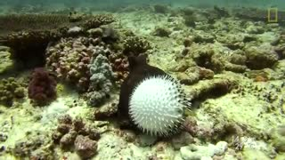 جدال مرگ و زندگی در زیر آب