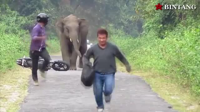 غافلگیری های ترسناک حیوانات