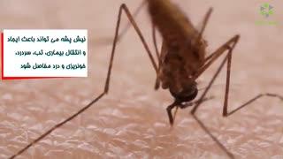 چند حقیقت که باید در مورد پشه بدانیم!