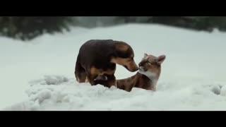 بین المللی فیلم مسیر یک سگ به خانه - A Dog's Way Home