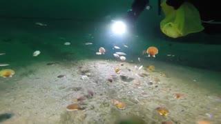 شنای صدف ها در اعماق دریا