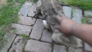 رفتار سگ مانند ایگوانا هنگام دیدن صاحبش