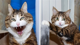 گربه های بانمک