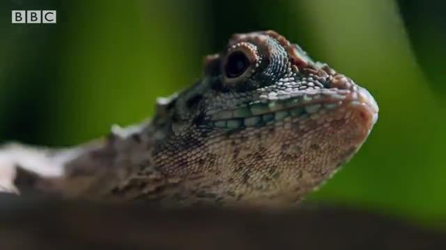 پرواز جانانه اژدهای کوچک در جنگلهای آمازون