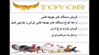 فروش دستگاه های جوجه کشی شرکت آریا طیور کهن