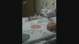 ازین گربه ها ادم دلش میخواد