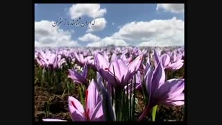 زعفران بهرامن- bahramansaffron- طلای سرخ ایران