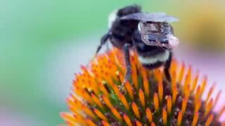 تولید کوله پشتی های الکترونیک برای زنبورهای عسل