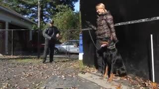 آموزش سگ دوبرمن - هاپ میو