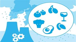 مواد غذایی مفید در برابر آلودگی هوا