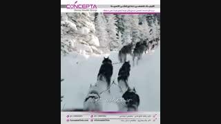 طبیعت استان آلبرتا | کلینیک کانسپتا