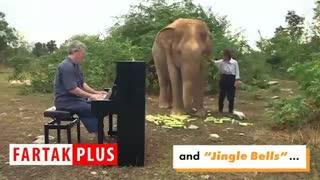 عجیبترین اجرای موسیقی با حضور فیلها