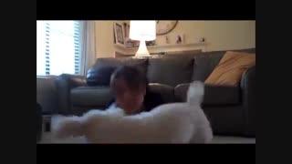 سگ پودل مینیاتوری آموزش دیده - هاپ میو