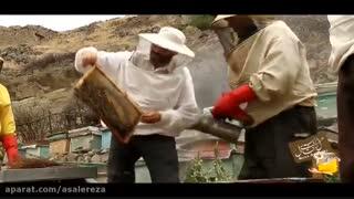 عسل رضا ژل رویال عسل طبیعی بره موم