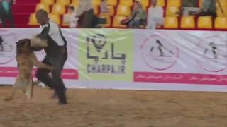 بزرگترین و اولین نمایشگاه بین المللی حیوانات خانگی و اسب ایران تهران شهر آفتاب