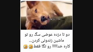 اسم فیلم: the purpose of dog