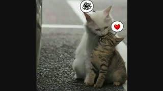 [...Cat]