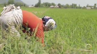 ویدئو موزیک فوق العاده زیبای مسعود درویش با نامِ الله تی تی جان (کلیپ رحمان)