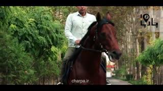 بهترین اسب های ایران اسب سیلمی تروبرد