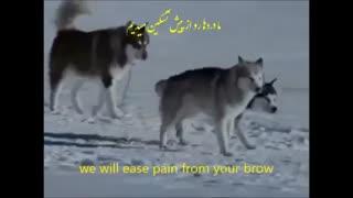 آهنگ در زمان صلح با زیر نویس انگلیسی و فارسی