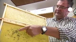 تولید عسل های رنگی!! همین را کم داشتیم!