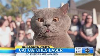 گربه ای که لیزر را گرفت