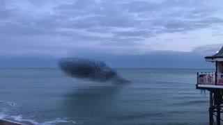 تصویری حیرت انگیز از پرواز دسته جمعی پرندگان