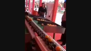دستگاه sort کردن میوه