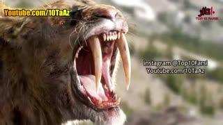 10 حیوانی  که منقرض شده اند