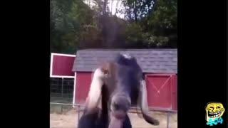 سرگرمی با حیوانات